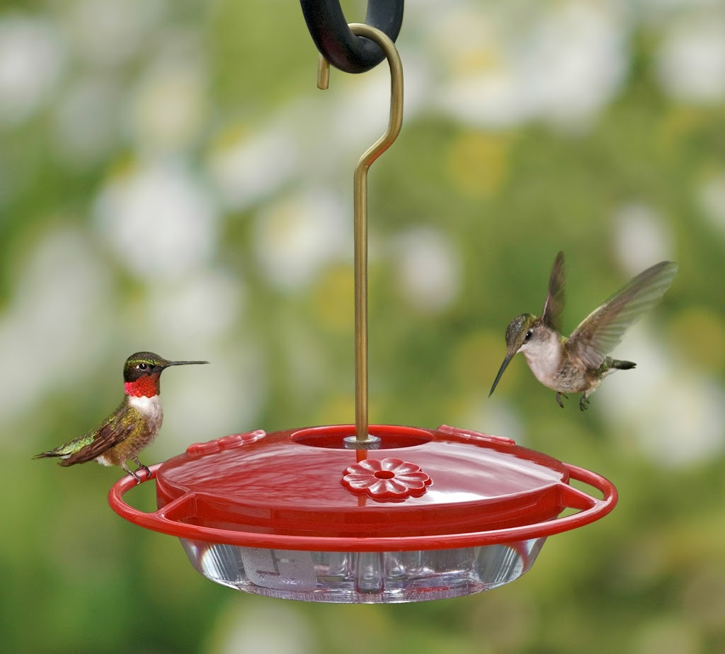 DIY Hummingbird and Oriole Nectar
